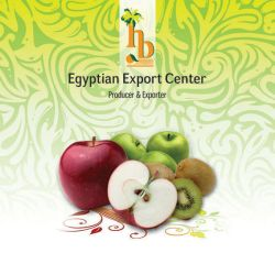 export import company flyer by Teach-Me-Freedom