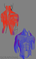 Male Torso Study by Seraphinae