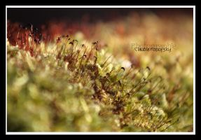 redgreen moss by declaudi