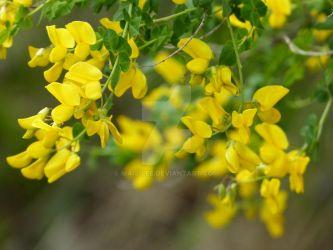 A little bit of yellow happiness 2 by Maij-Lee