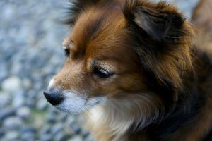 sad dog by paoly81
