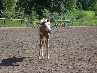 Stock 523: spotted colt 2 by AlzirrSwanheartStock