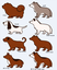 Game Dog Designs