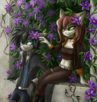 Clematis by Jetera