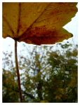 Autumn Leaf 2 by Necy