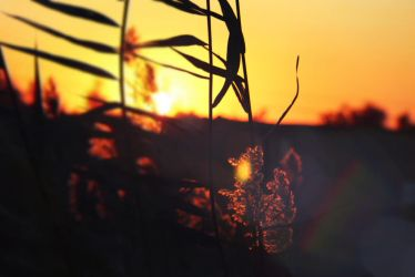 Plant at Sunset in Iraq by bluemix2