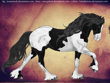 Gypsy Vanner Lineart by LuluTheroux