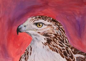 Red Tailed Hawk by EdgedFeather