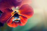 Bumbling. by Annarigby
