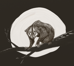 Slow Loris by KelpGull