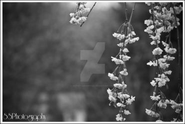Flowers by SSPhotographyinc