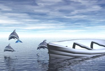 Dolphins by IStock