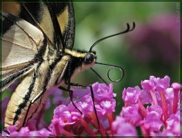 'Where is my nectar?' by Irena-N-Photography
