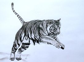Pouncing Tiger by salt25
