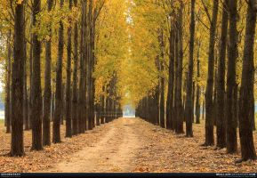 Golden path by MeAli-ADK