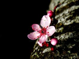 Lone Blossom by HappyClementine