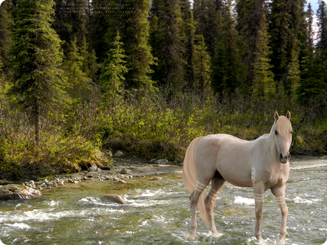 A Walk in the Riverbed by silverthorne-studios