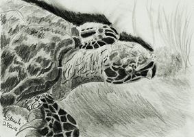 Hawksbill sea turtle by SulaimanDoodle