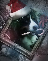 Bernese Mountain Dog Photoshop by willy5000