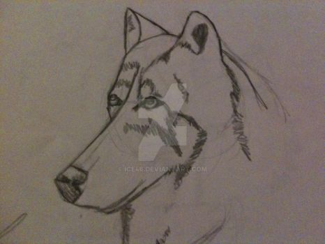 Dog by ICE46