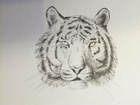 Inktober 2017, Day 16: Tiger by GLangGould