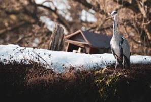 Heron by denisjelec