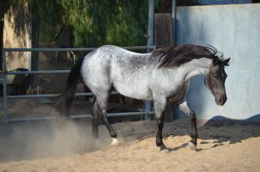 DWP FREE HORSE STOCK 133 by DancesWithPonies