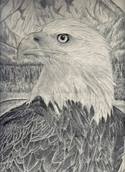 Bald Eagle by Zoltack429