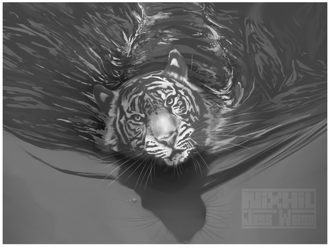 Tiger Swimming by Nixhil