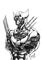 Marvel Heroes Wolverine by Fpeniche
