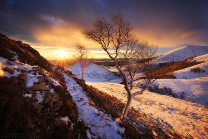 Highland Trees by FlorentCourty