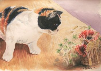 Cat and poppies by danuta50