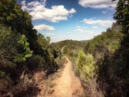 background - path and rolling hill - tuscany by 8moments