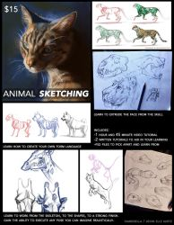 Animal Sketching Tutorial by TamberElla