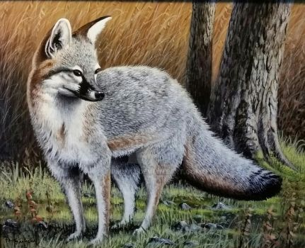 A quick glance, grey fox by pm3013