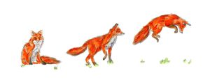 Foxes by Hummingbird26