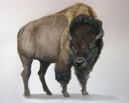 American Bison by maggie14and1