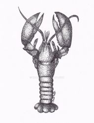 Lobster by Kalo546