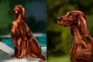 Irish setter by Pihguinolog