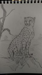 Cheetah practice - again and again and again and.. by kosko99
