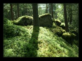 Mossy Forest of Light by Navanna
