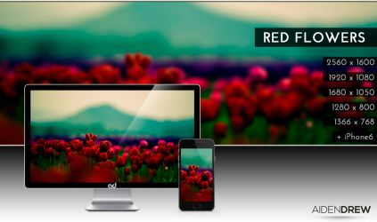 .: Red Flowers Wallpaper :. by AidenDrew