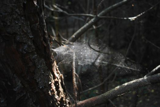 spider web in the light by Talynin