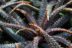 Aloe Abstract by MrDannyD