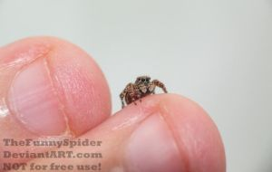 Little cutie on my finger by TheFunnySpider