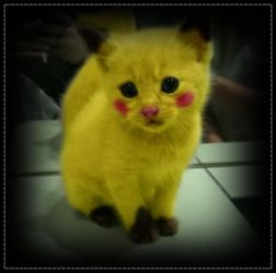 pikachu cat!! by sowhataboutme