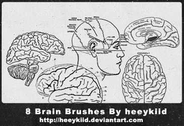 8 Brain Brushes By heeykiid by heeykiid