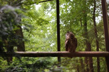 Captured Owl by cleverless