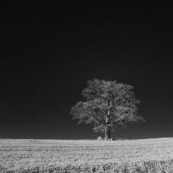Baum-SW-05 by subart59