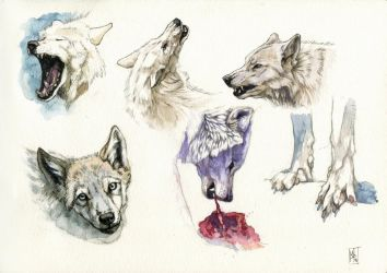 Wolves doodles by wolf-minori